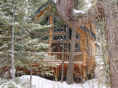 McCall cabin rental - The famous 'crooked pine' tree