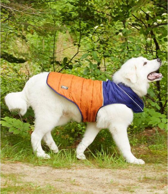 Mountain Classic Dog Parka, Colorblock