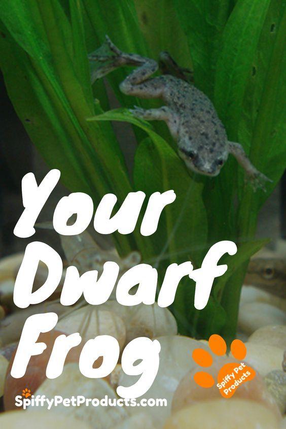 Best Diy African Dwarf Frog Tank Setup For 2020 Spiffy Pet Products Dwarf Frogs Dog Organization Frog Tank