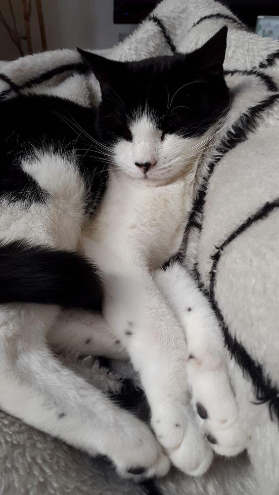 Mia Katze | Pawshake