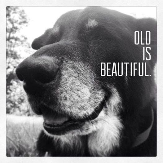 Old Is Beautiful:
