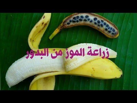 كيفية زراعة الموز من البدور في المنزل جزء الأول Youtube Banana Fruit Food