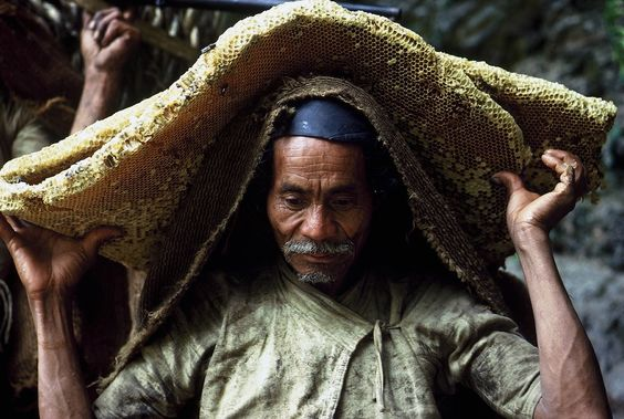Honey Hunters : Eric Valli: Fearless Gurung, Valli Himalayas, Himalayan Honey, Honey Hunter, Largest Honeybee, Himalayan Foothills, Honeybee Photographer
