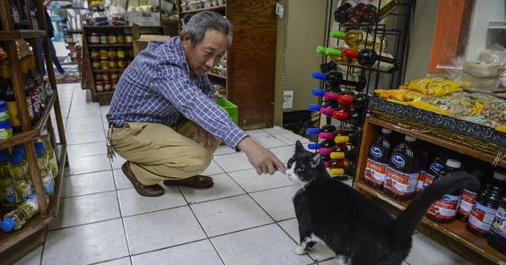 The Claws Are Out Don T Mess With New York Bodega Cats Cat Nyc Bodega Cat Pet Cafe