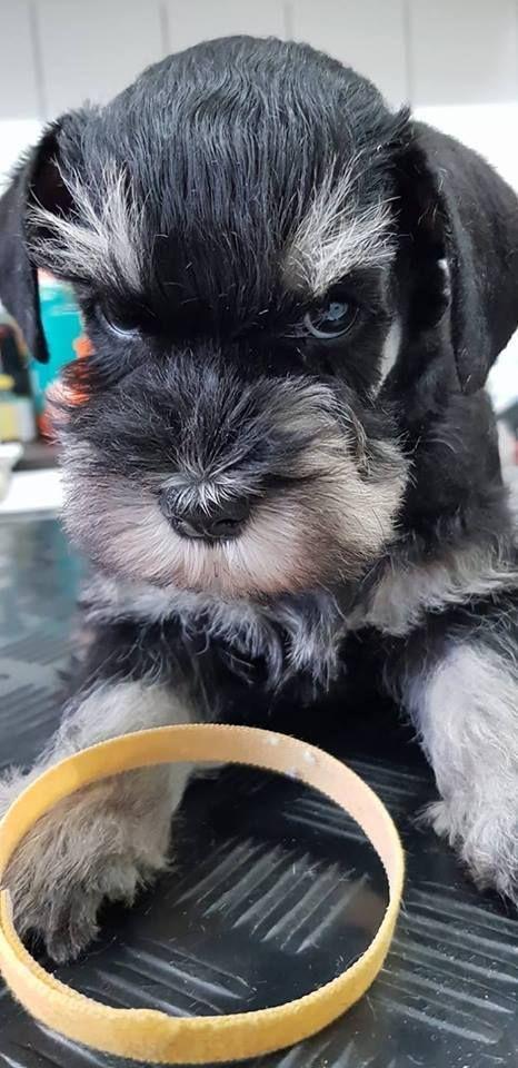 Pin By Richard Bush On Banging Pics Puppies Funny Animals Pets