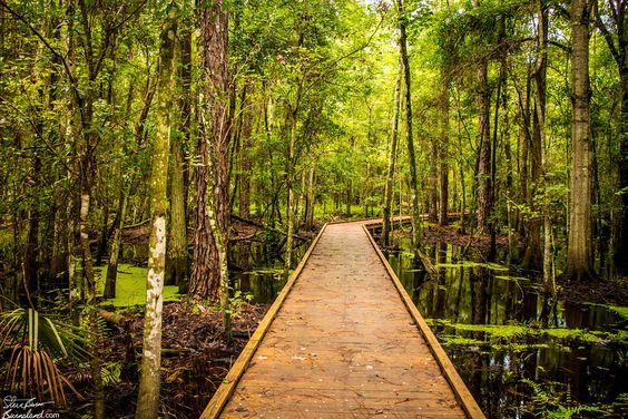 A boardwalk through the swamp in Kissimmee, Florida, not too far from Walt Disney World. Read more about it at the blog post.