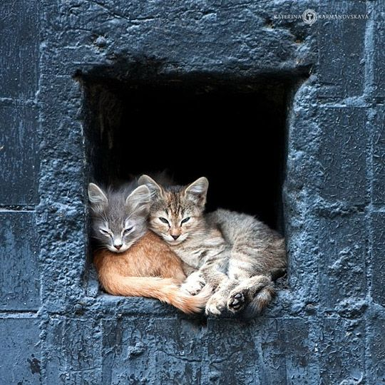 Snuggled kittens: