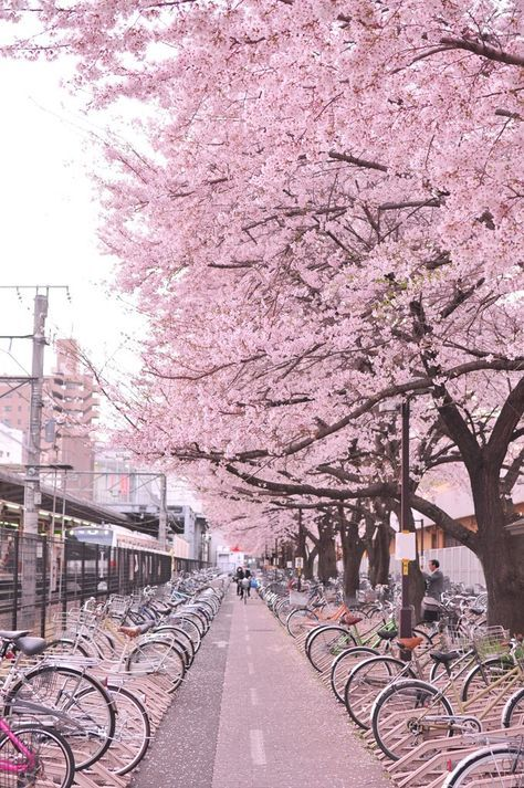Drag Me Down Lockscreens Google Search Cherry Blossom Japan Nature Photography Beautiful Places