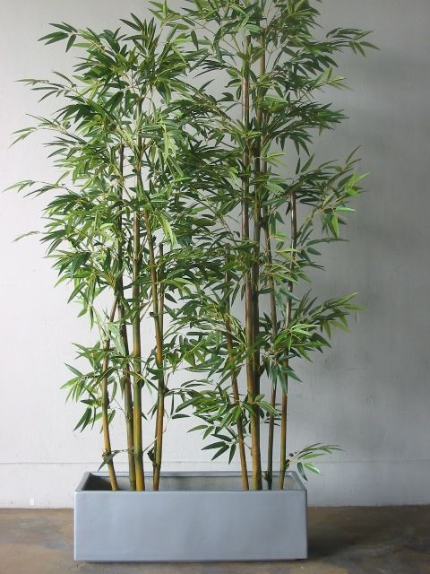 Wind Block Ideas For Patio: Bamboo In Pots...for Deck Privacy (do You All See A Trend