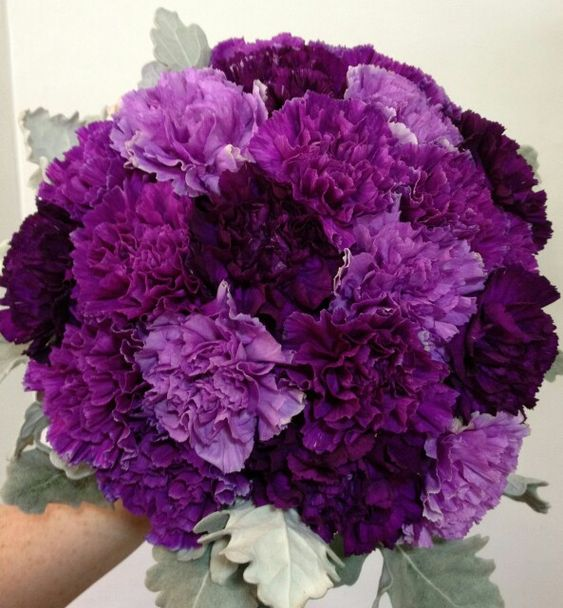 Wedding Bouquet Featuring: Purple & Grape Carnations Along With Dusty Miller