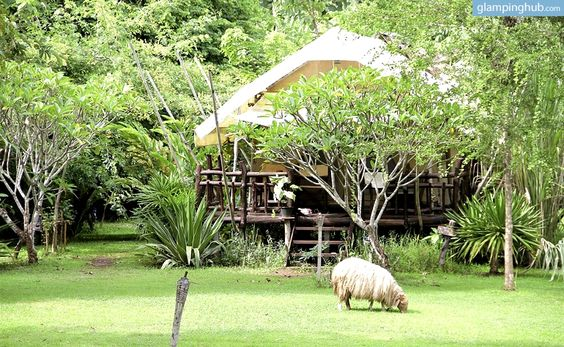 Safari Tents in Thailand | Glamp Tents Thailand