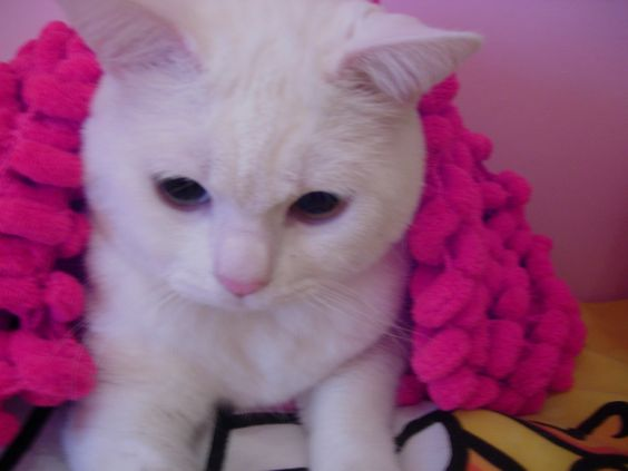 Morfeo Cat meww