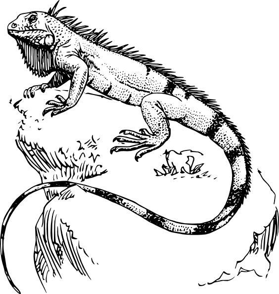 Best Iguana Clipart 13997 Clipartion Com Iguana Tattoo Lizard Iguana