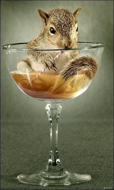 Photomontage, A squirrels like apple juice - Art digital - Biographies dartistes et de peintres célèbres, analyses doeuvres, mouvements artistiques pour votre brevet de lhistoire de lart. Peintures et photographies de Mik-Art