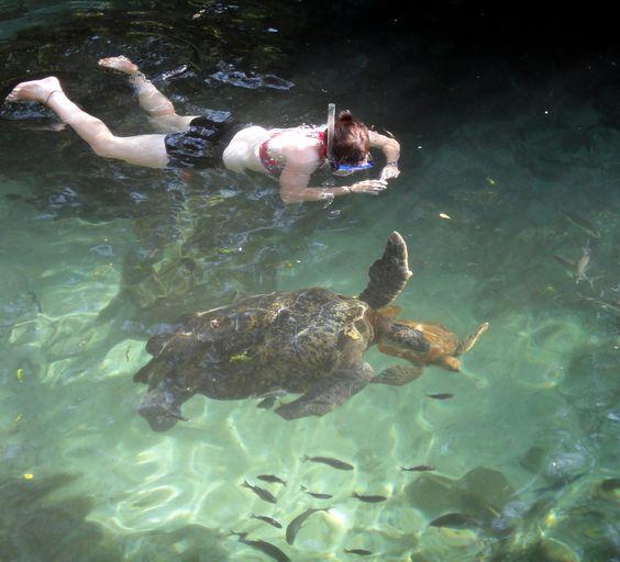 swimming with giant sea turtles in zanzibar zanzibar