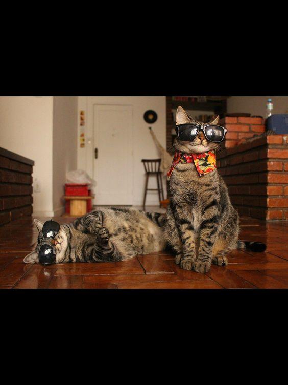 Cansei de ser gato #canseidesergato