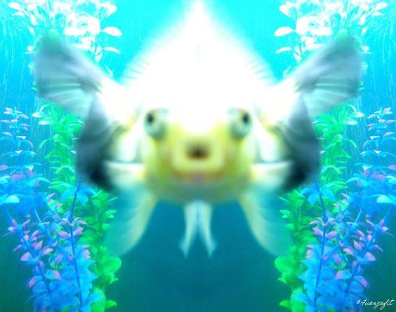 ✧☽ Tank splotches 'Aqua Neeko' ☾✧ #bohemefithome #goldfish