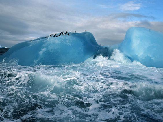South Sandwich Islands penguins