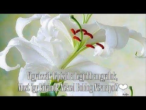 ღ❤Szívemből kívánok Nagyon Boldog Névnapot Neked❤ღ - YouTube