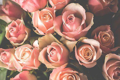 Buque De Flores Fotos Baixe Imagens Gratis Pixabay Buque De
