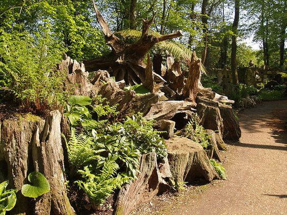 Prince of wales wales and ferns on pinterest