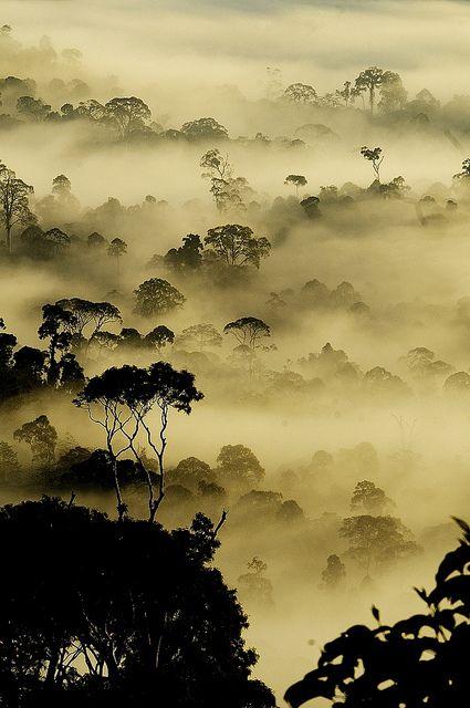 Rain Forest in Borneo..