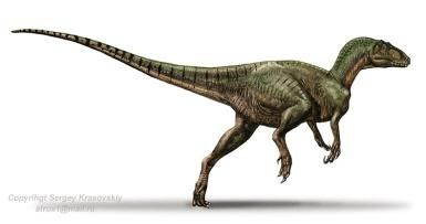 Australovenator Facts: Australovenator (Sergey Krasovskiy)