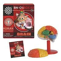 Parents may want to keep Ein-O's Box Kits in mind as to use as great visual aids when the science fair rolls around.  Click here to learn what 8-year-old Emma has to say about the toy: http://www.cheapism.com/best-educational-toys/1174_ein_o_s_human_brain_box