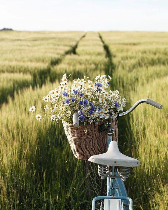 Wildflowers in a bike basket in field! So beautiful! #summer