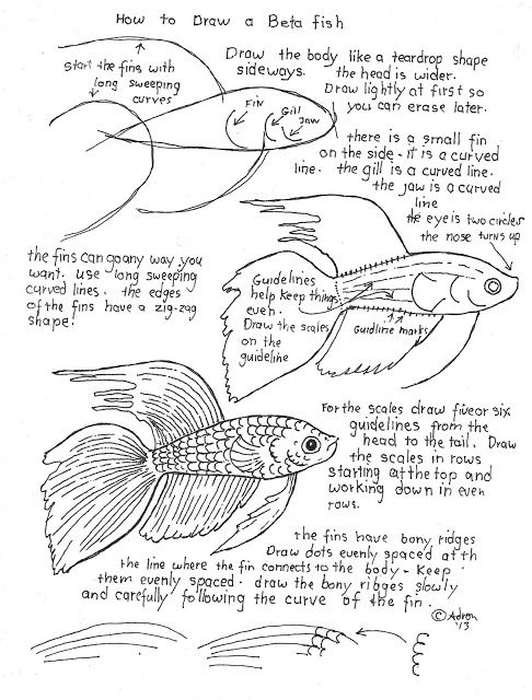 how to draw a beta fish work sheet and lesson  it is easy