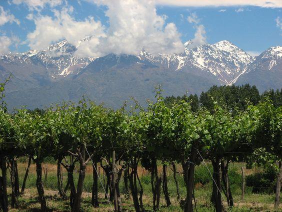 Vineyards outside Mendoza, Argentina
