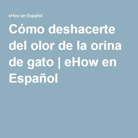 Cómo deshacerte del olor de la orina de gato   eHow en Español