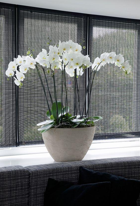 Witte orchidee in strak interieur. Dat bloemen en planten ook prima passen in een moderner en strak interieur bewijst deze foto. Zet dan wel planten van dezelfde soort in een strakke pot of vaas om een mooi effect te krijgen. Bloemen Bureau Holland