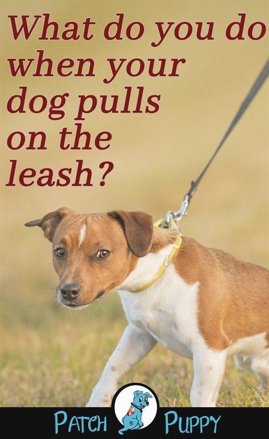 Dog Training Logo Dog Training Quakertown Lucky Dog Training