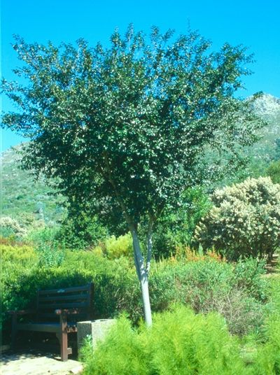Trees for Pools - Indigenous Gardening
