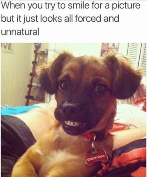 The Art Of Taking Photos Funny Instagram Memes Funny Animal Jokes Funny Dog Memes