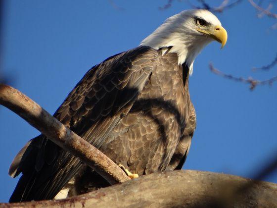Credit Island Davenport Iowa | Photos: QC Wildlife