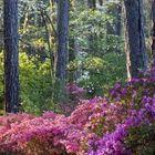 Georgia Flowers - How To Information | eHow.com