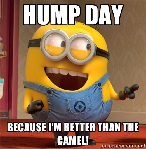 hump day because i'm better than the camel! - dave le minion ...: