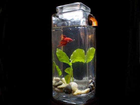 Awesome fish aquariums and glasses on pinterest for How do you clean a fish tank