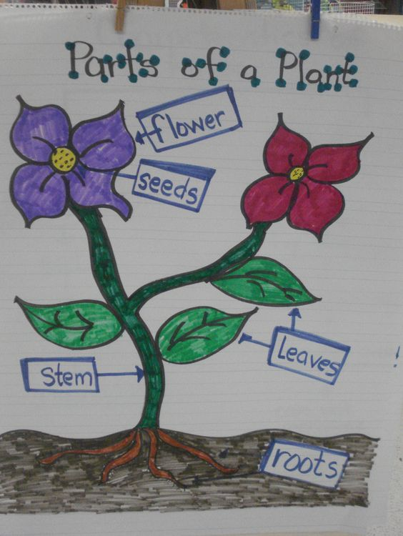 Plant parts, Plants and Anchor charts on Pinterest
