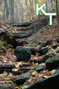 Indiana State Forest And Elk On Pinterest