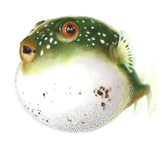 Watercolor sea marker drawings and animal illustrations for Puffer fish art