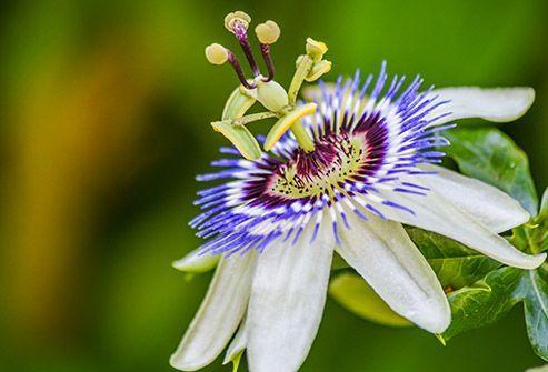 Slideshow All About Herbal Teas With Images Herbalism Herbal Tea Tea