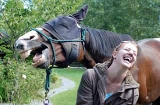 Laugh with your horse