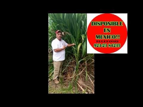 Clon 51 En Mexico Youtube Youtube