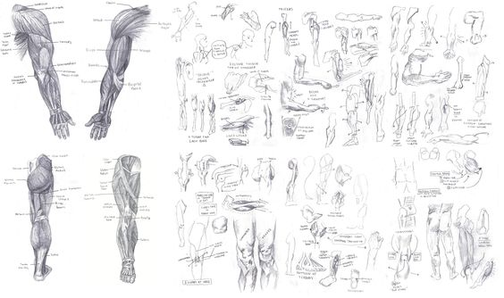 atlas of human anatomy for the artist a href=