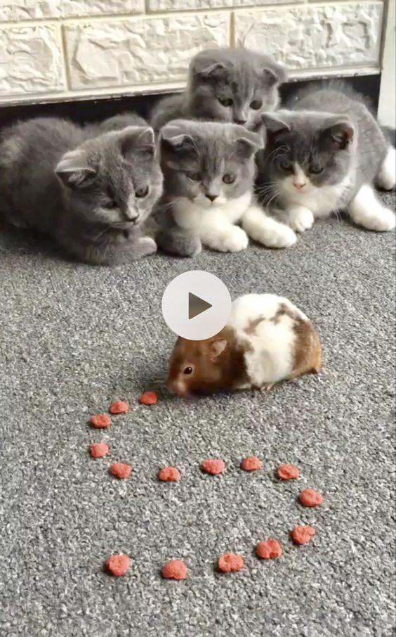 cachorrinho brincando com o gatinho