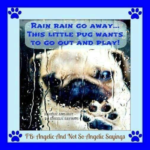 Pin By Brenda Guffey On Funny Things Going To Rain Photo Rain Go Away
