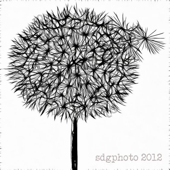 Black Dandelion on White 8 x 8 Square Print Botanical by sdgphoto, $30.00: 30 00, Sdgphoto 30, Ceramica Porcellana